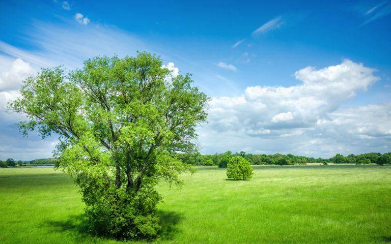 Umwelt und Generikaproduktion